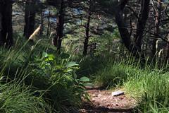 Nous voilà seul — baisse de Cachin, Alpes-Maritimes, juillet 2018 (Stéphane Bily) Tags: stéphanebily fontan alpesmaritimes mountain montagne sentier chemin path