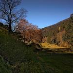 Im Langenbachtal am Nationalpark thumbnail