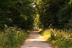 Running in the woods (Vak Photos) Tags: woods forest path trees arbored nature silhouette running scenery greenery