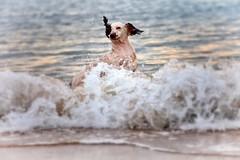 Fun in the Ocean (Missy Jussy) Tags: rupert rupertbear ocean waves northeastcoast northsea northumberland coast