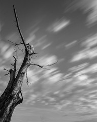 The Past (tshabazzphotography) Tags: blackandwhite bw monochrome tree dead ancient clouds cloudporn longexposure 10stop canon centralflorida sunshinestate mornings sunrise angles explore hiking adventure alone solitude brave courage