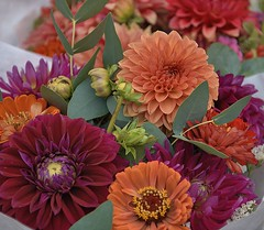 Pretty Flowers (Scott 97006) Tags: flower bouquet pretty colorful nature dalias dahlia