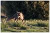_LUN4108-1 (josemiguellunaromero) Tags: animales naturaleza