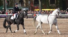 Hengstparade Warendorf (ow54) Tags: warendorf hengstparade hengste pferde horses