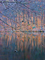 Lake Reflection (Stanley Zimny (Thank You for 29 Million views)) Tags: water lake reflection tree orange