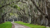 A Walk To Remember (Del.Higgins) Tags: spanish moss low country beaufort south carolina olympus panorama dirt road oak live charleston