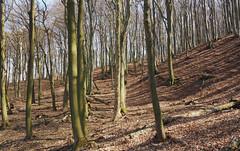 buchenwald (waynorth) Tags: wald buchenwald wienerwald vorfrühling