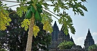 INDONESIEN, Java, hinduistische Tempelanlage Prambanan, 17353/9897