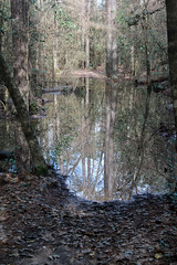 Trail to Cypress Slough - Explored (RPahre) Tags: cypressslough bigthicketnationalpreserve bigthicket texas reflections trail