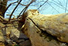 driftwood-2 (jclesher21411) Tags: driftwood shadow wood shadows riverbank focus fstop flowing flow