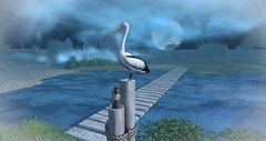 Moon River_Mr Percival @ Deepmarsh (larisalyn (Rachel)) Tags: pelican river moon animals marsh birds beach lake sea