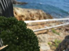Torrent de s'Alga. Racons de Formentera (montsealmar) Tags: viatges formentera