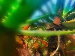 (FOTOS PARA PASAR EL RATO) Tags: cdmx texturas espinas ramas verde plantas