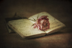 A Soldier's Diary (shawn~white) Tags: stilllife historic object rose aged antiquity book diary distressed dreamy floral flower melancholy nostalgia reminisce reminiscing rosa spiritual table tabletop texture vintage weathered writing dried