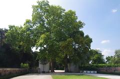JLF17853 (jlfaurie) Tags: jardin garden bagatelle paris france francia parc parque 22072018 mpmdf jlfr jlfaurie mechas roseraie fleurs roses rosas
