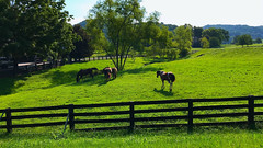 Grazing .... (~ Cindy~) Tags: horses grazing highway58scene tennessee 2018 7dwf