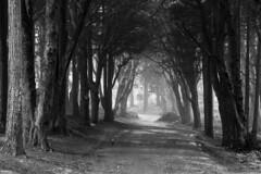 [my secret place] (rui.delgado.alves) Tags: nikond500 digital sintra landscape paisagem