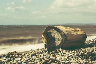 Washed up log