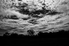 out of the sky (kceuppens) Tags: heistopdenberg averechten fujixt20 fuji xt20 1855 landscape landschap black white bw blackandwhite wit zwart zwartwit outdoors outdoor nature buiten openlucht