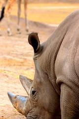 IMG_0817 (Bob_lewerissa) Tags: wildlands emmen zoo canon 80d 70200 l nonis usm