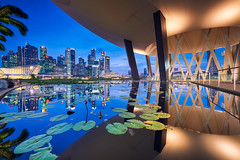Marina City Nights (Scintt) Tags: singapore mbs marina bay water clarity filter sky dramatic travel tourist attraction exploration movement motion skyline cityscape city urban modern structures architecture buildings offices shenton way cbd scintillation scintt jonchiangphotography iconic surreal epic wideangle nikon 1424 haidafilter still calm glow light tones rafflesplace nature pond pool dusk twilight waterfront sands jubilee longexposure slowshutter bluehour clearnight artscience museum lotus lily