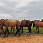 Banana Bank - Leaving the Horses... thumbnail