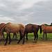 Banana Bank - Leaving the Horses...
