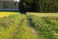Põlluvahe tee (Jaan Keinaste) Tags: pentax k3 pentaxk3 eesti estonia loodus nature maastik landscape tee road põld field rebane redwox
