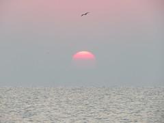 IMG_0024x (gzammarchi) Tags: specialexb italia paesaggio natura mare ravenna lidoadriano alba sole animale uccello volo monocrome
