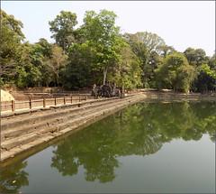 Angkor, Neak Pean Pond 20180203_120559 DSCN2680 (CanadaGood) Tags: asia seasia asean cambodia siemreap angkor neakpean buddhist khmer temple pond pool tree archaeology canadagood 2018 thisdecade color colour
