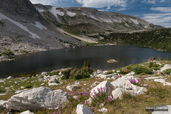 Medicine Bow and Fireweed (kevin-palmer) Tags: snowyrange medicinebownationalforest wyoming mountains summer july afternoon nikond750 tamron2470mmf28 water green grass lookoutlake fireweed flowers wildflowers pink colorful medicinebowpeak clouds