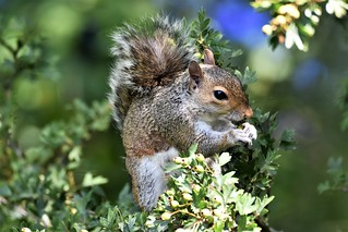 Hungry squirrel.