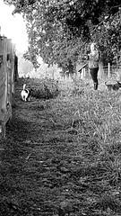 Morning Walkies (Worcestershire UK) Tags: dogs bordercross jrt jackrusselterrier charlottebrown thegoldenhour walkies hanbury blackwhite