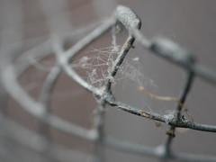 web in the mesh (BeMo52) Tags: macromondays lumixg30mm28 mesh makro spidersweb