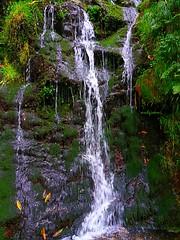fall (archgionni) Tags: boschi woods verde green cascata fall acqua water natura nature