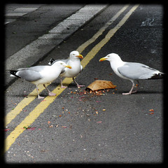 Discussion (cazjane97) Tags: seagulls eastbourne discussion june summer snack booty bounty