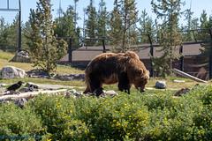 IMG_0960.jpg (Hogan W) Tags: westyellowstone montana unitedstates us