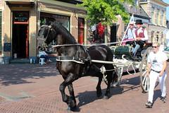 Frisian horses in De Jouwer (Davydutchy) Tags: joure dejouwer fryslân friesland frisia frise nederland netherlands niederlande paysbas holland boerenbruiloft optocht parade umzug fries frisian friesisch frysk hynder horse paard pferd cheval cavalo caballo häst koh kůň лошадь hest koets rijtuig kutsche carriage sjees klederdracht kostuum costume tracht top hat hogehoed hut july 2018