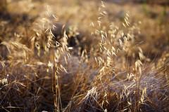 fen (JonathanCohen) Tags: lateafternoon goldenhour nature lines dof summer sunset bokeh light shadow