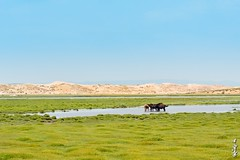 Beautiful day... (N.Batkhurel) Tags: season summer sky sand dune animals horse birds water lake ger övörkhangai mongolia ngc nikon natur nikkor landscape