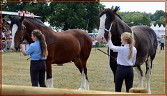 Nantwich Show Cheshire UK (A Plackett) Tags: nantwich cheshire show agricultural entertainment countryside horse draught shire young handler