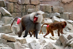 IMG_0889 (Bob_lewerissa) Tags: wildlands emmen zoo canon 80d 70200 l nonis usm