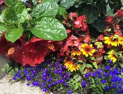 Flowers (i_kaya@rogers.com) Tags: photograph photography art parks