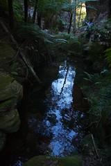 Still pool (Geoff Main) Tags: australia canon6d canonef24105mmf4lisusm carnarvongorgenationalpark ferns gorge landscape nationalpark queensland rockpool wardscanyon