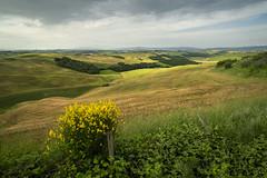 tuscany spring (Diana Klawitter) Tags: toskana tuscany asciano crete
