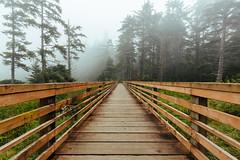 Ways Of The Forest (John Westrock) Tags: nature forest trees vanishingpoint fog foggy boardwalk washingtonstate pacificnorthwest canoneos5dmarkiii canonef1635mmf4lis johnwestrock