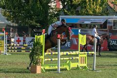 A9908551_s (AndiP66) Tags: springen langenthal 2018 5august2018 august pferd horse schweiz switzerland kantonbern cantonberne concours wettbewerb horsejumping equestrian sports springreiten pferdespringen pferdesport sport sony alpha sonyalpha 99markii 99ii 99m2 a99ii ilca99m2 slta99ii sony70400mm f456 sony70400mmf456gssmii sal70400g2 amount andreaspeters
