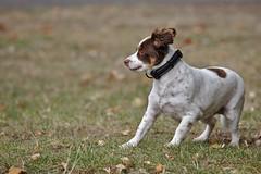 Aerodinamic (R.D. Gallardo) Tags: aerodinamic susto scary dog perro buru luna canon eos 6d eos6d tamron 70200 f28