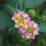 Dans mon jardin thumbnail