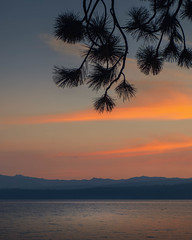 A colorful sunset at Kings beach, Lake Tahoe, California. (pedferr) Tags: horizon sunny color cinematic nature bay moody lowlight 4x5 orange morning summer beach tree tahoe outdoors dramatic view lines usa landscape sunset truckee vertical evening clouds bluesky water warm colorful scenery unitedstatesofamerica river trip travel sunrise summit sky lake california mountain